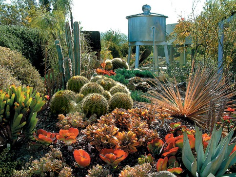 Schultz_6_cactus-garden-k