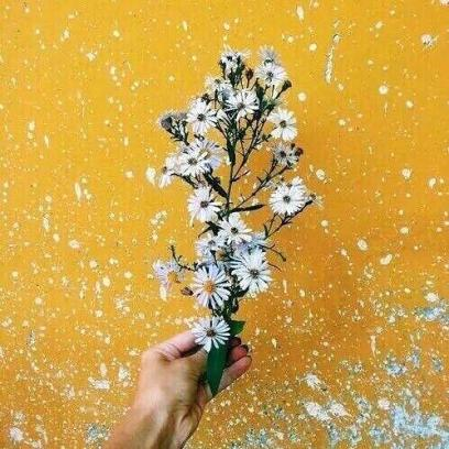 yellow-photography-aesthetic-flowers-flower-vibes-tumblr